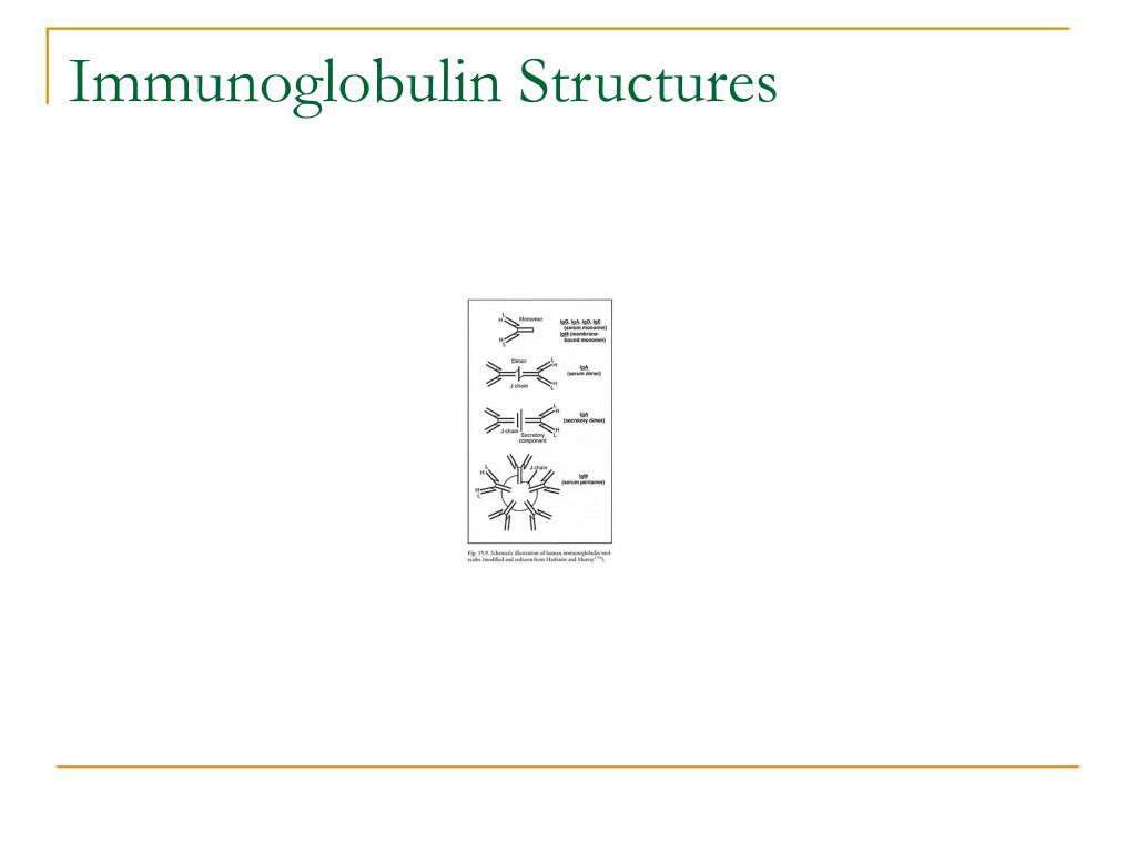 Immunoglobulin Structures