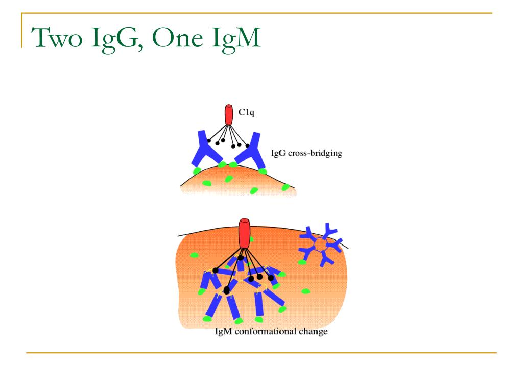 Two IgG, One IgM