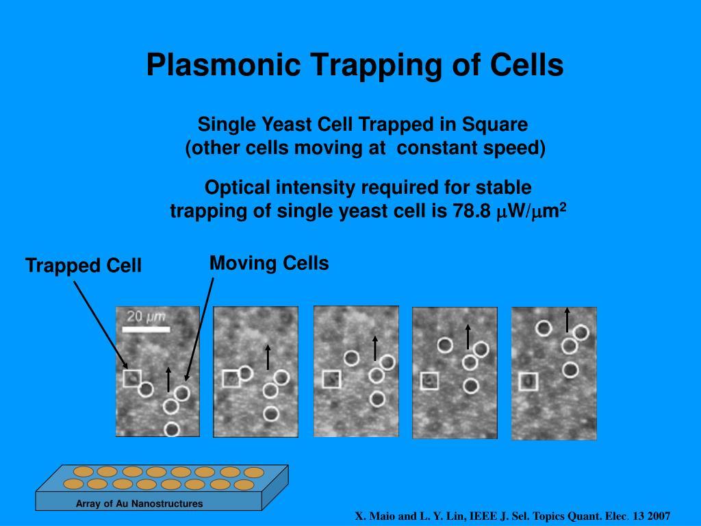 Array of Au Nanostructures