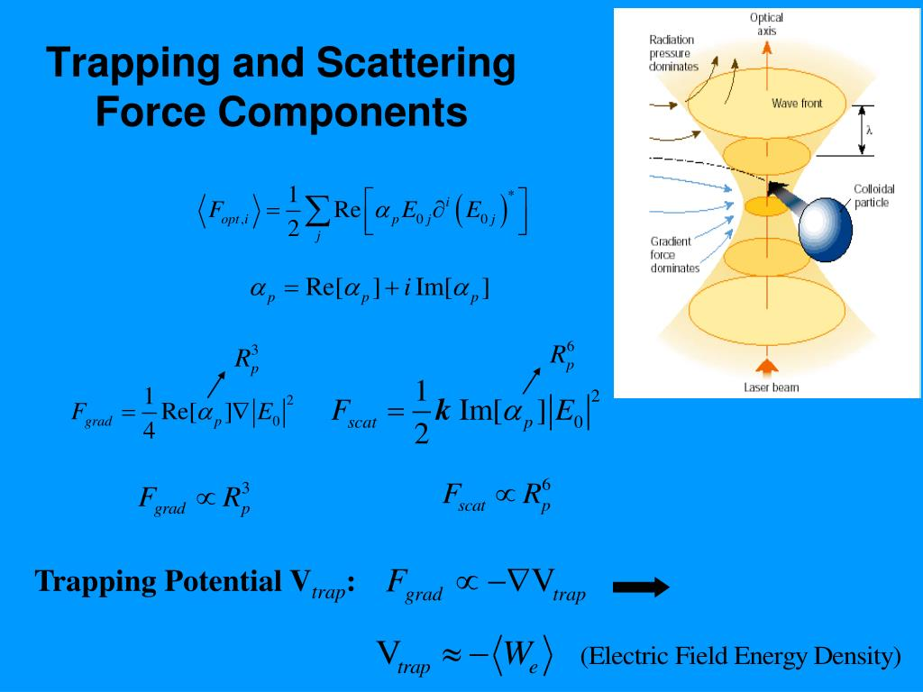 Trapping and Scattering Force Components