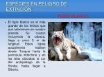 especies en peligro de extinci n10