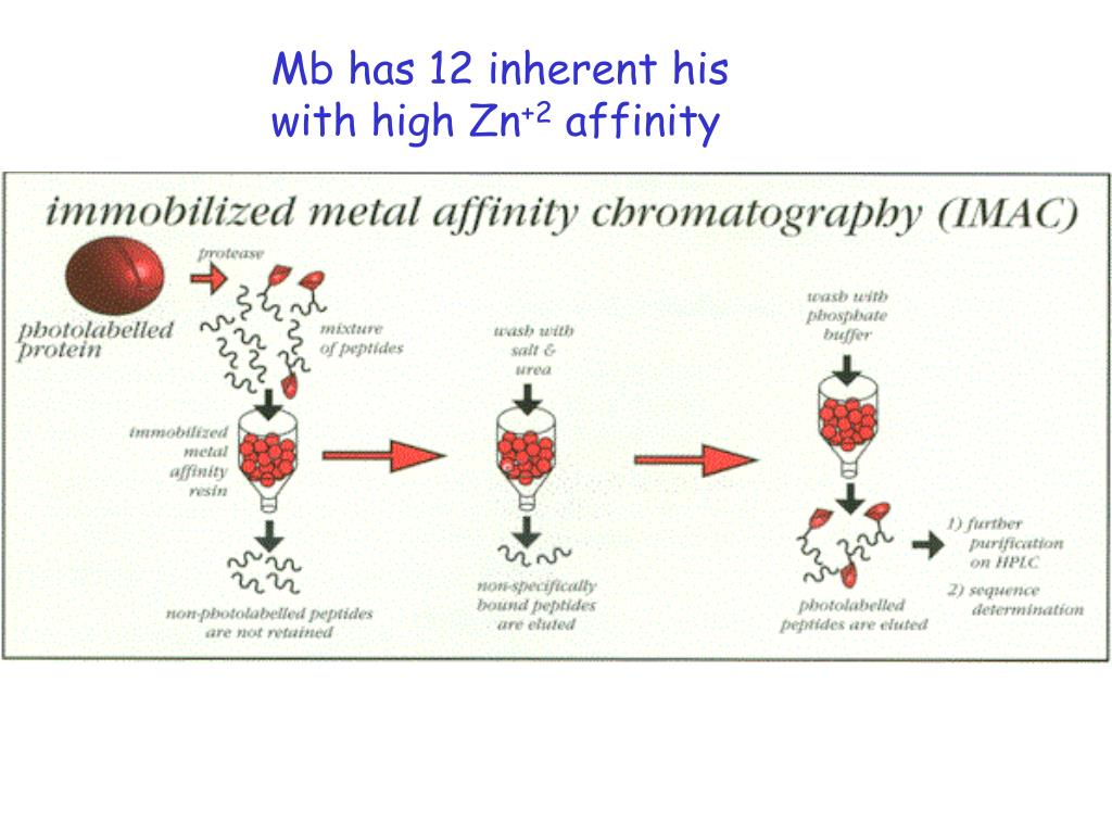Mb has 12 inherent his