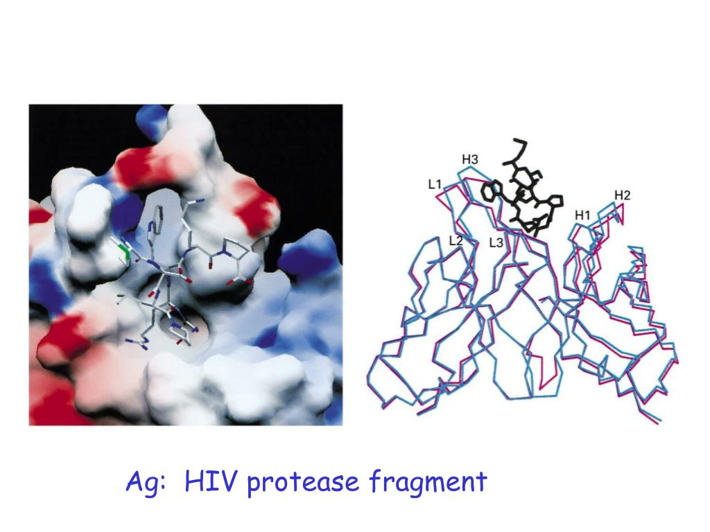 Ag:  HIV protease fragment