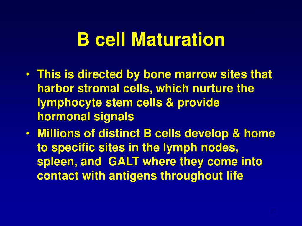 B cell Maturation