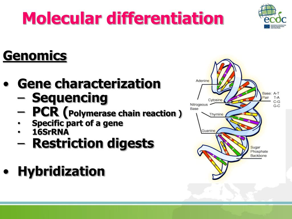 Molecular differentiation