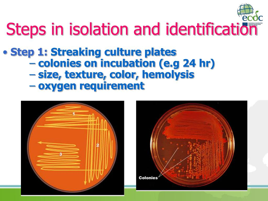 Steps in isolation and identification