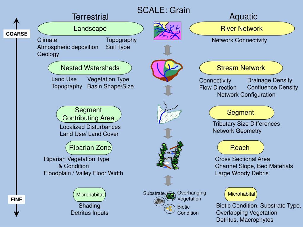 SCALE: Grain