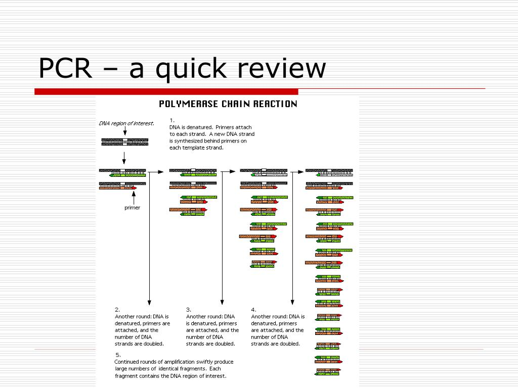 PCR – a quick review