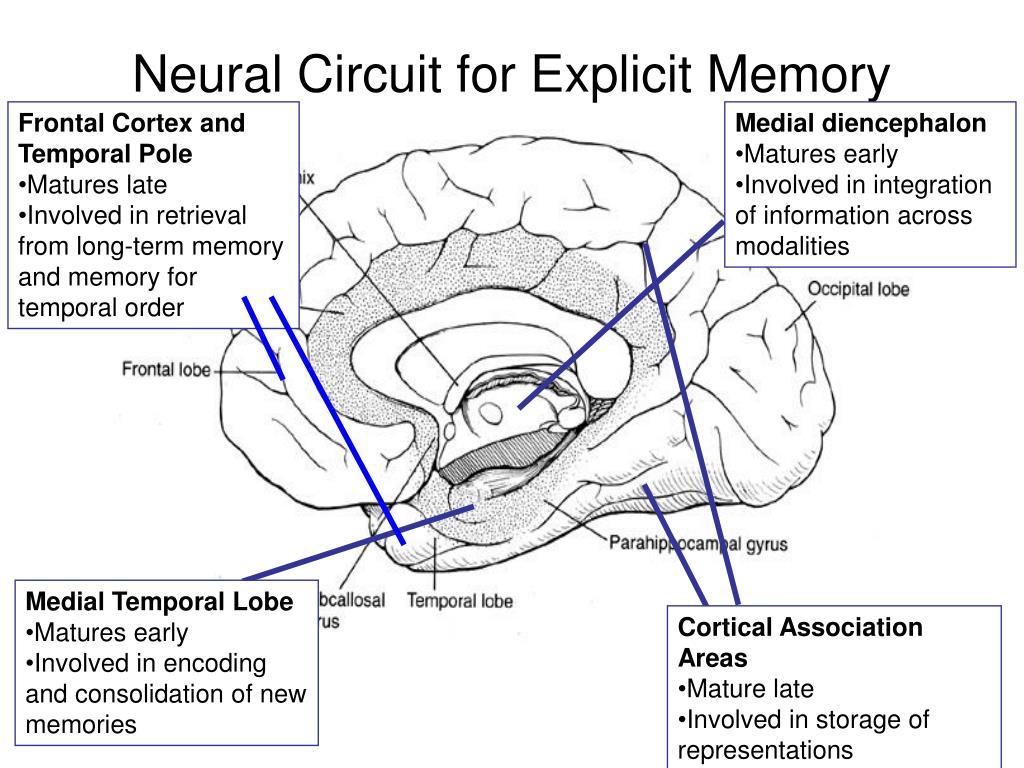 Neural Circuit for Explicit Memory