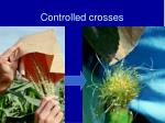 controlled crosses6
