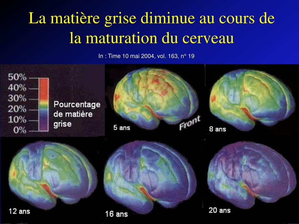 La matière grise diminue au cours de la maturation du cerveau