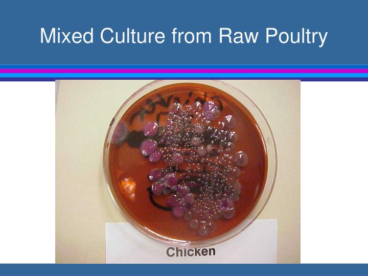 Mixed culture from raw poultry