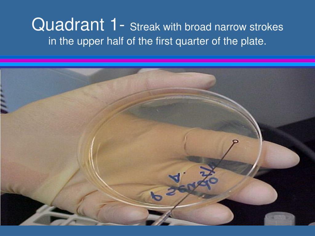 Quadrant 1-