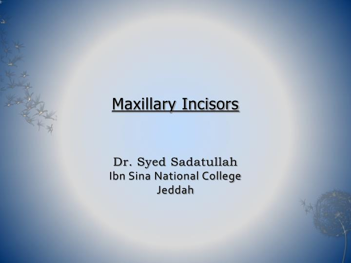 Ppt Maxillary Incisors Dr Syed Sadatullah Ibn Sina National College Jeddah Powerpoint Presentation Id 391025