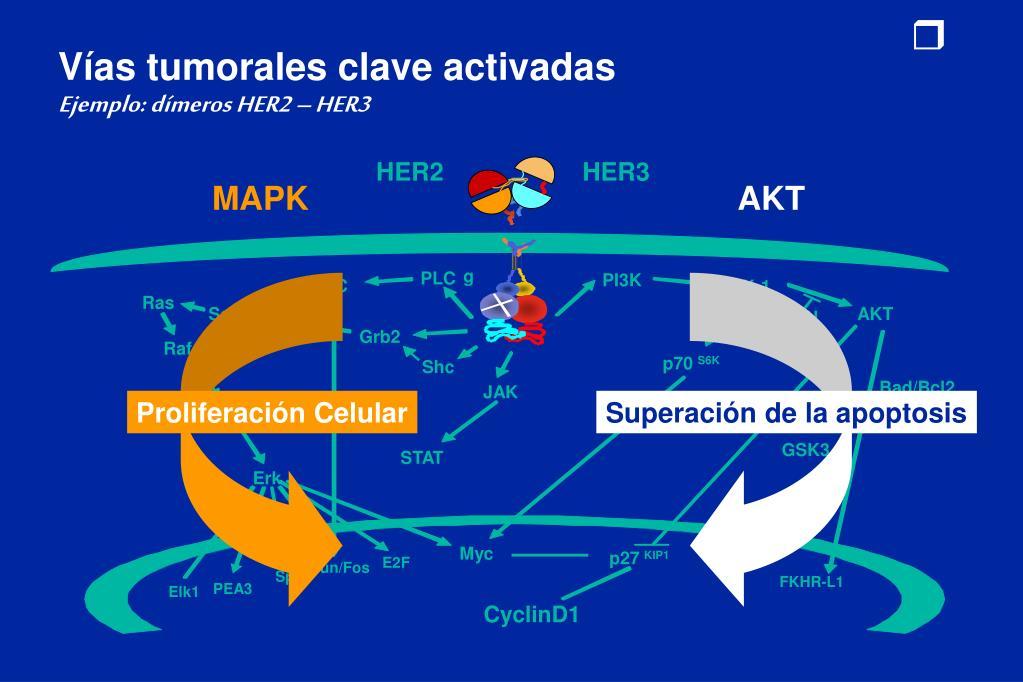 Vías tumorales clave activadas