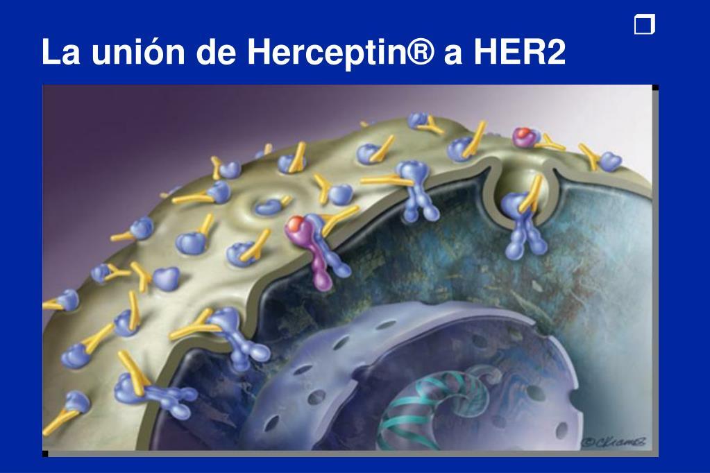La unión de Herceptin® a HER2