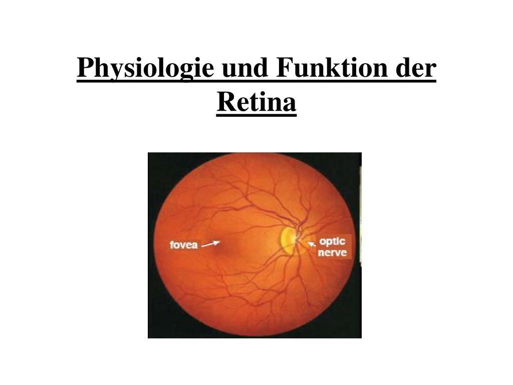 PPT - Physiologie und Funktion der Retina PowerPoint Presentation ...