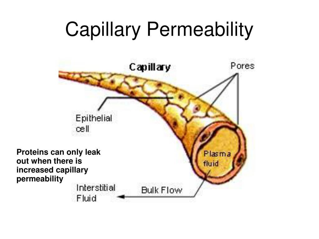 Capillary Permeability