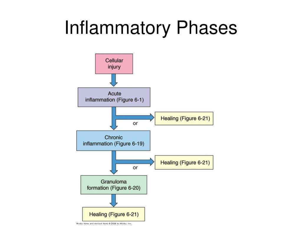 Inflammatory Phases