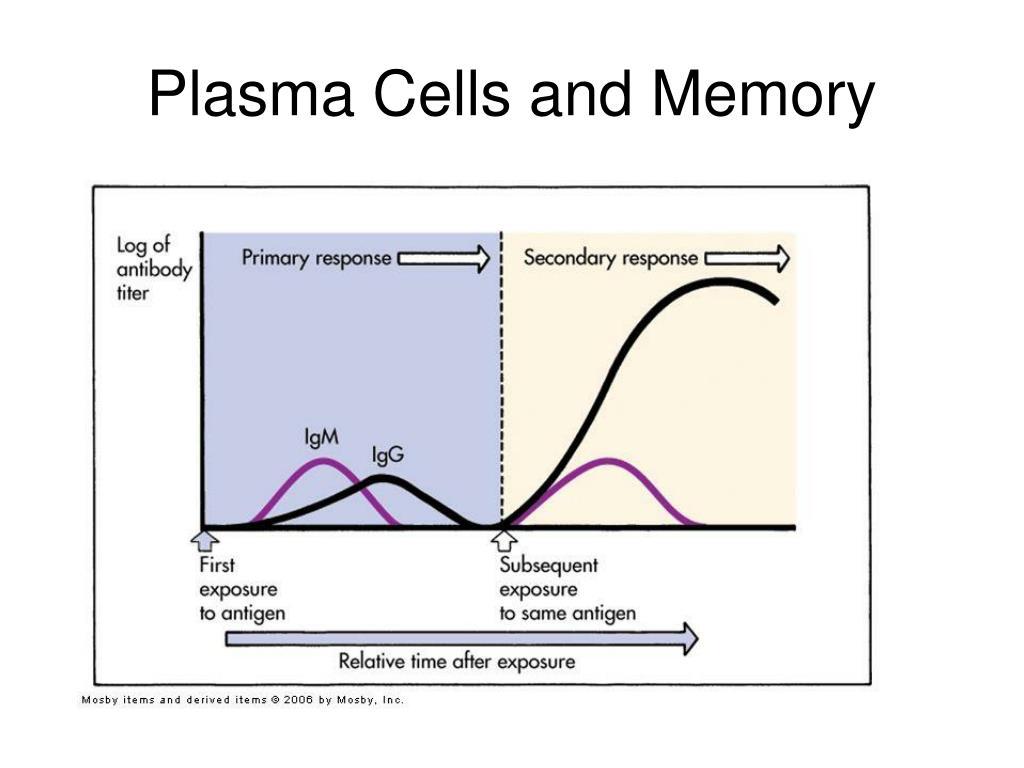 Plasma Cells and Memory