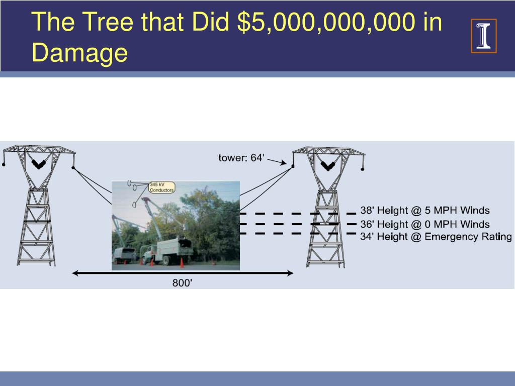 The Tree that Did $5,000,000,000 in Damage