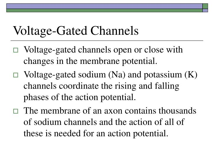 Voltage-Gated Channels