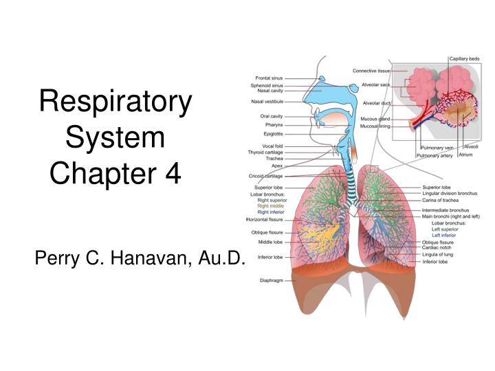 Respiratory system chapter 4