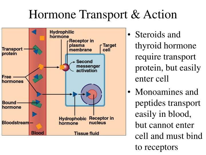 dopamine sex hormone in Swan Hill