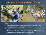 zebranet status and next steps