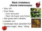 black chokeberry aronia melanocarpa