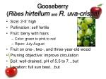 gooseberry ribes hirtellum and r uva crispa