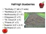 half high blueberries
