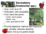 serviceberry amelanchier spp