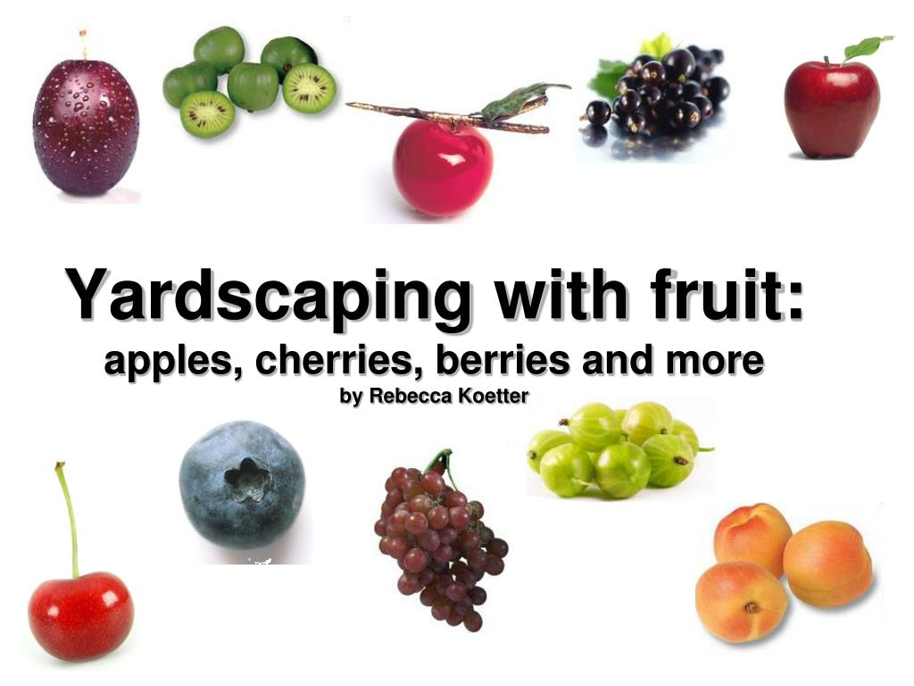 yardscaping with fruit apples cherries berries and more by rebecca koetter l.