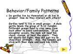 behavior family patterns