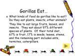 gorillas eat