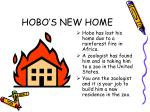 hobo s new home