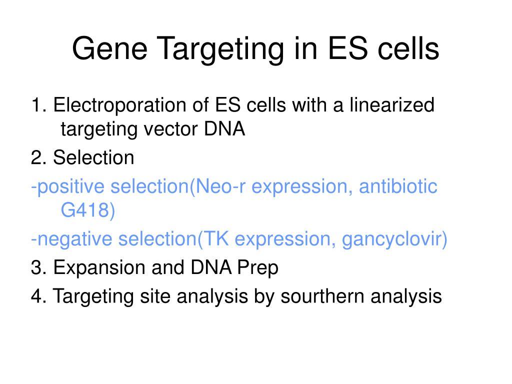 Gene Targeting in ES cells