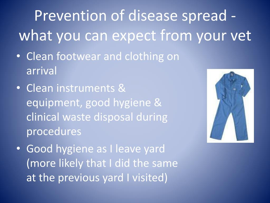 Prevention of disease spread - what you can expect from your vet