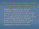 what is the national companion animal surveillance program ncasp