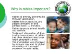 why is rabies important