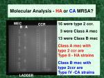 molecular analysis ha or ca mrsa