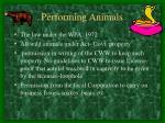 performing animals20