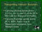 transporting animals instances