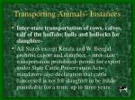 transporting animals instances27