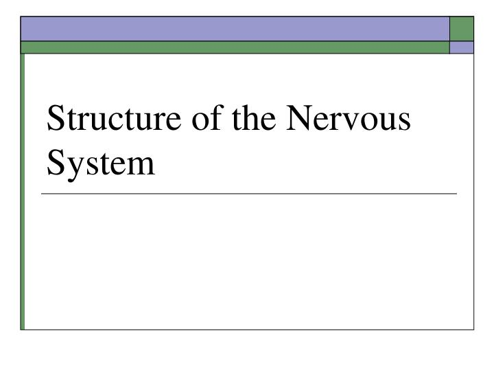 structure of the nervous system n.