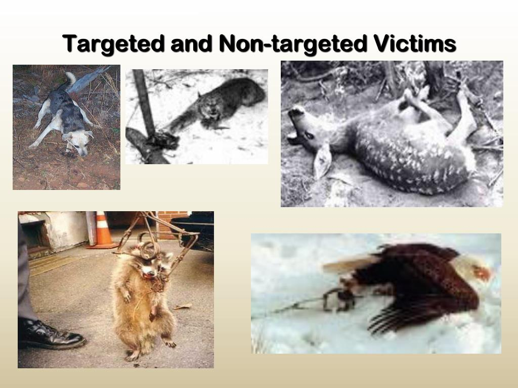 Targeted and Non-targeted Victims