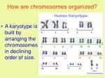 how are chromosomes organized