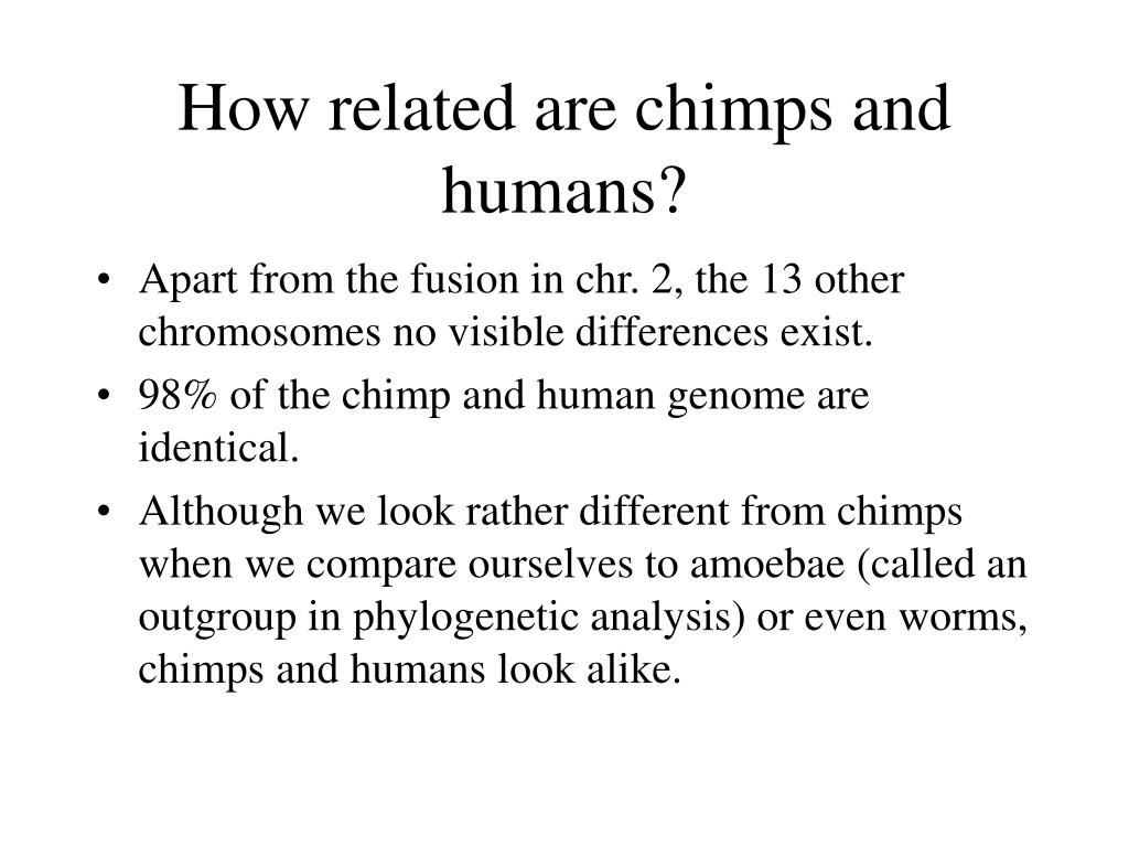 How related are chimps and humans?