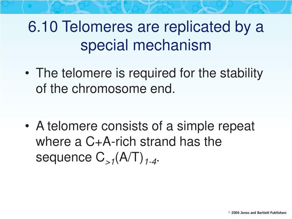 6.10 Telomeres are replicated by a special mechanism